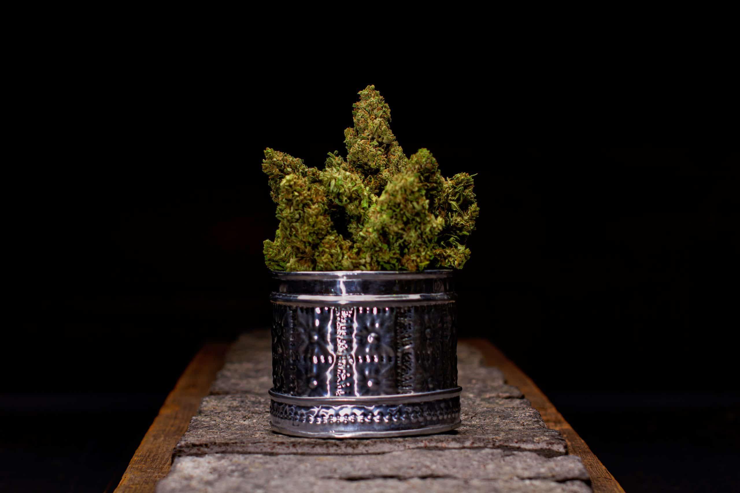 Wiseacre Farm Cannabis Golden Bough Canna Provisions Jon Piasecki